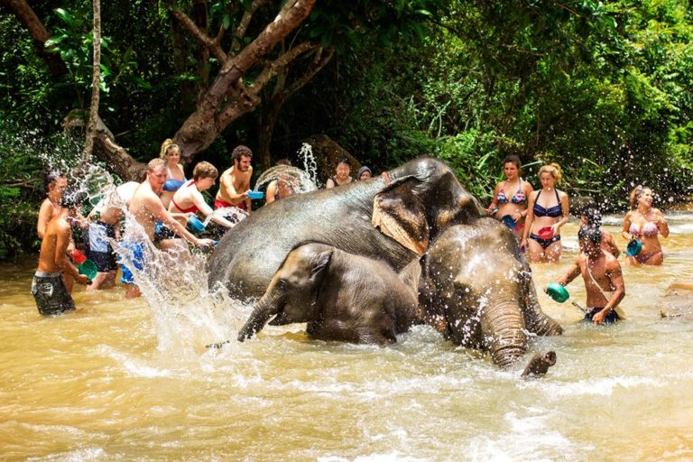 Elephant Jungle Sanctuary Chiang Mai Jornada Completa